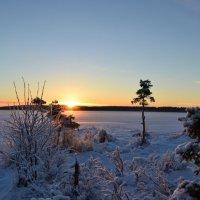 Краски зимнего вечера :: Ольга