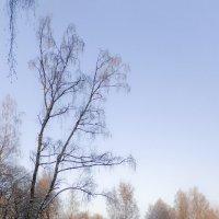 Зимнее :: Инна Шолпо