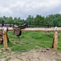 бывают кони стальные, а бывают и деревянные... :: Galina