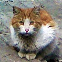 Кошка без дома и хозяев :: Владимир Ростовский