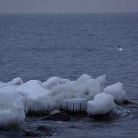 Море и лед. :: Максим Воробьев
