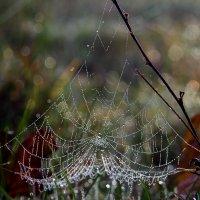 Осенняя паутинка :: Елена Куценко