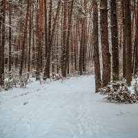 зимний лес :: Yana Odintsova