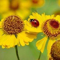 Красно-желтое :: Paparazzi