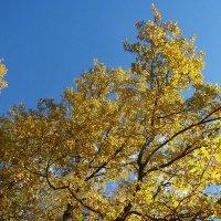 Прекрасная осень :: Ксения Мифэйр