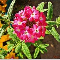Совершенство цветка :: Лидия (naum.lidiya)