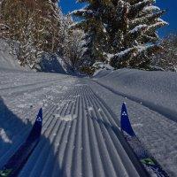 С лыжни... :: Walter