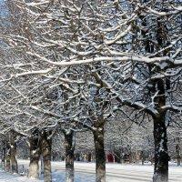 После снегопада. :: Валентина ツ ღ✿ღ