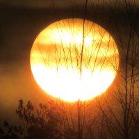 Солнце :: Mariya laimite
