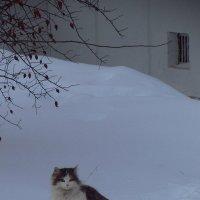 Я здесь живу :: Андрей Лукьянов