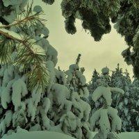 зимние зарисовки :: Константин Бабкин