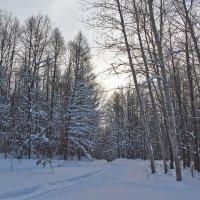 на лыжне :: Седа Ковтун