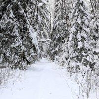 зимняя дорога :: александр пеньков