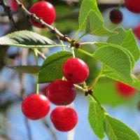 прекрасен ягод аромат :: валя