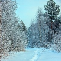 Зима. :: Бронислав Богачевский