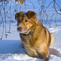 У нас теперь тоже зима :: Александр Белоконь