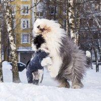 борьба :: Лариса Батурова