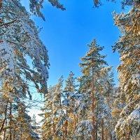 Двойная лыжня :: Андрей Зайцев