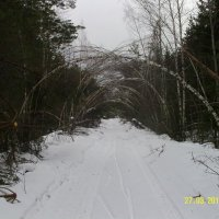 Берёзовый тоннель :: Виктор Мухин