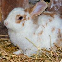 Кролики-это не только ценный мех.... :: Николай Волков