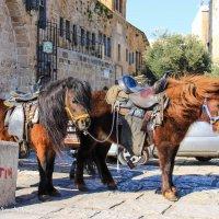 Маленькие пони,ждут юных наездников :: Николай Волков