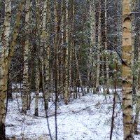 В зимнем лесу. :: Николай Масляев