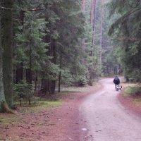 Лесные жители потянулись в город :: Михаил Шивцов