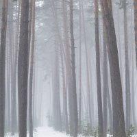 Линии леса :: Сергей Корнев