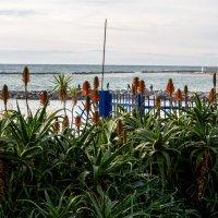 Цветы и море :: Witalij Loewin