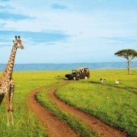 НАЦИОНАЛЬНЫЙ ПАРК АМБОСЕЛИ (КЕНИЯ) :: Volmar Safaris