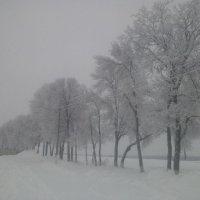 Зима2016 :: Надежда