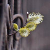 Весна приходит - живое проникает :: Михаил Плецкий