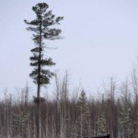 Место раздумий в зимнюю пору :: Михаил Плецкий