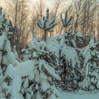 после снегопада :: Сергей Цветков