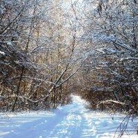 Зимняя дорога... :: Марина Харченкова