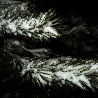 Снег :: Виталий Павлов