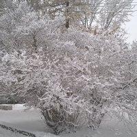 Снежность 3 :: Сергей Трусов