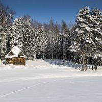 Часовенка в лесу :: Ольга Мансурова