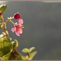 Начало цветения :: Лидия (naum.lidiya)