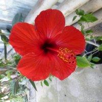 Никитский ботанический сад :: Наиля