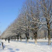 Скользя  по тротуару зимнему... :: Валентина ツ ღ✿ღ