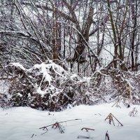 Зима в Харькове :: Владимир Кроливец