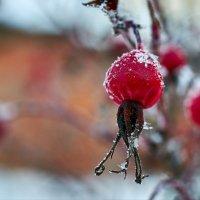 Зимой и летом - одним цветом. Продолжение. :: Андрей Куприянов