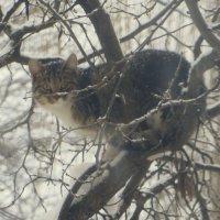 Охотник за птицами! :: Ирина Олехнович