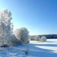 Зимним морозным днем :: Anna