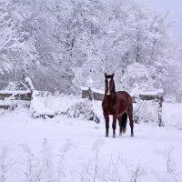 Бездомный конь :: Нина