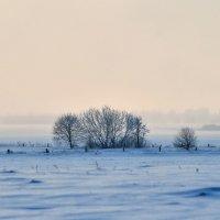 Зимнее,туманное... :: Юрий Анипов