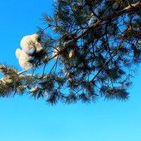 Прекрасное зимнее небо :: Катя Бокова