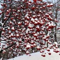 Зима :: Марина
