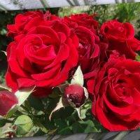 С праздником дорогие Татьяны!!! :: Тамара (st.tamara)